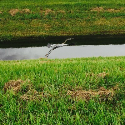 Sarasota Parks: The Celery Fields