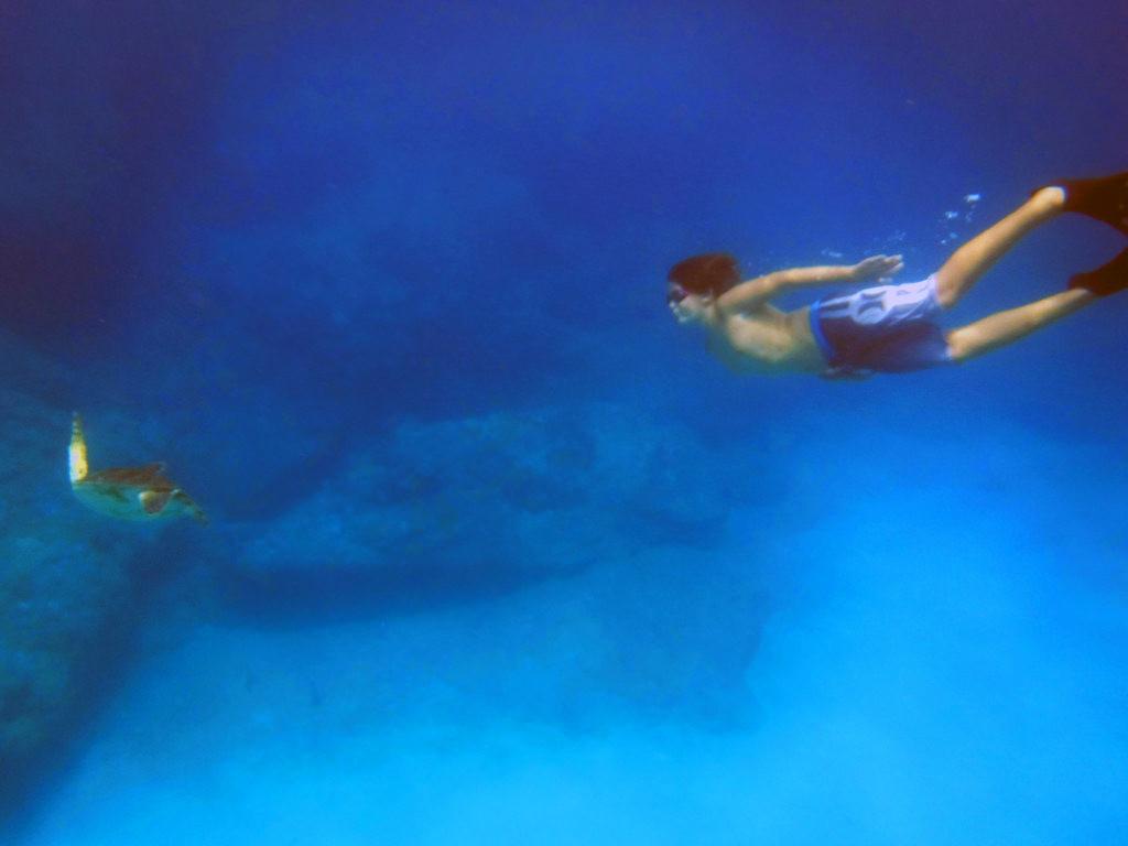 snorkeling with turtles-thesurferskitchen